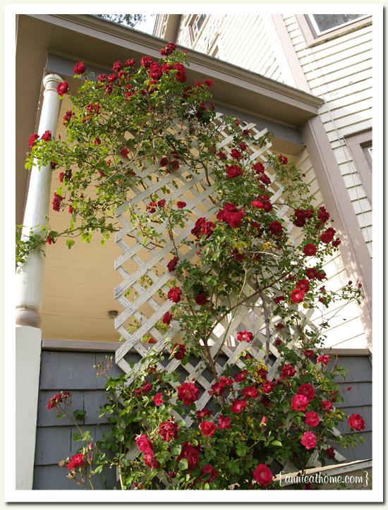 how to make a climbing rose trellis